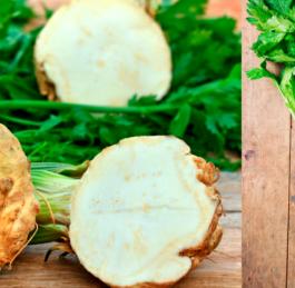 Nenápadný celer prospívá zdraví víc, než byste mysleli