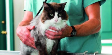 Kočky a ledviny – preventivní péče